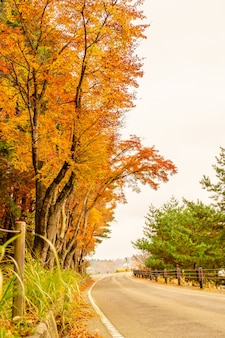 Сезон красочные коричневые солнечные лучи снаружи