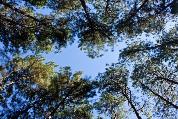 Season summer forest background blue