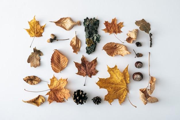 깔끔한 직사각형 배열로 흰색 위에 이끼가 있는 다양한 잎, 원뿔, 익은 밤 및 나무 껍질이 있는 계절 가을 또는 가을 정물