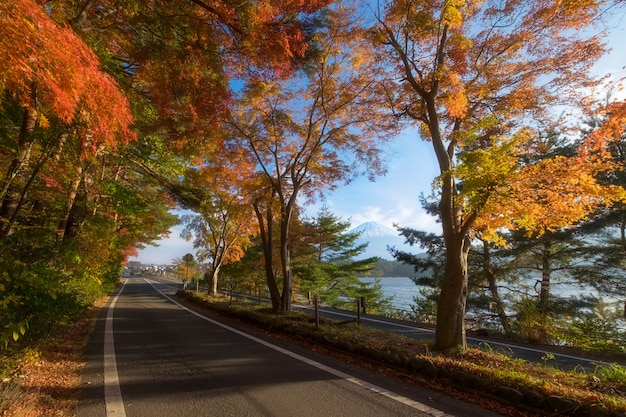 Seasonal natural landscape in fall season