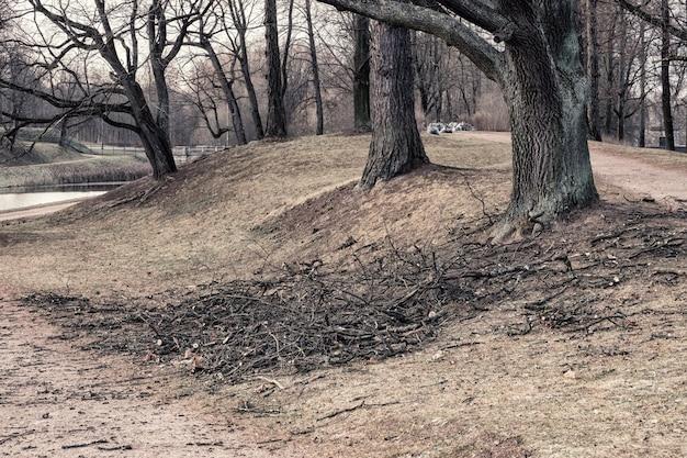 Seasonal pruning of trees in the city park