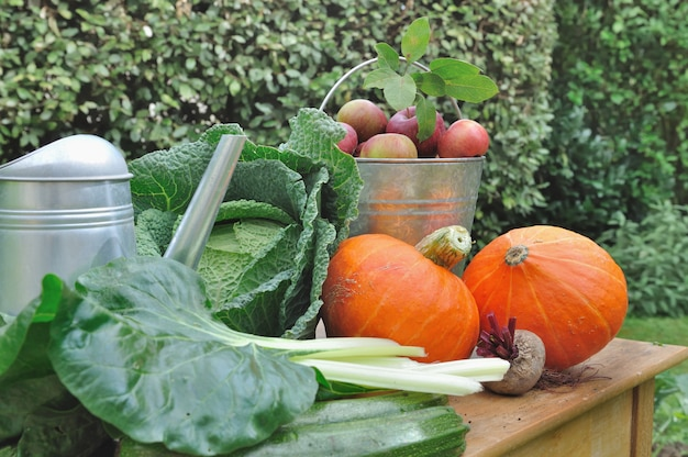 Seasonal vegetables and apples in the garden