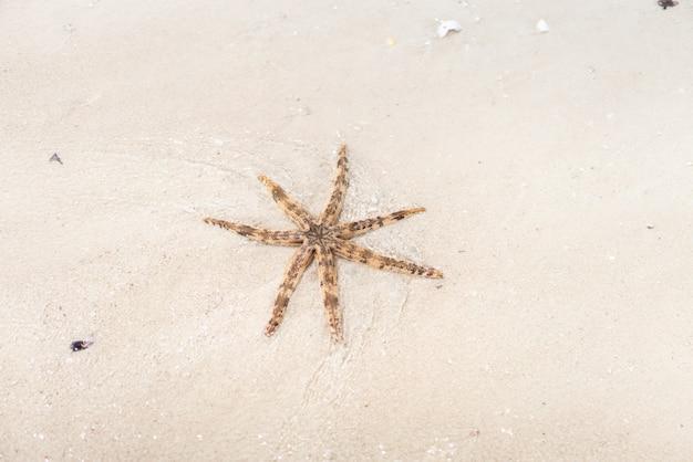 Seastar sea star on the beach sand
