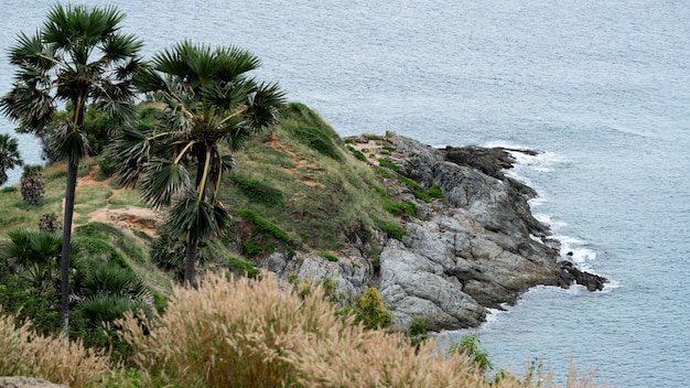Seaview & palm trees at promthep cape landmark viewpoint in phuket
