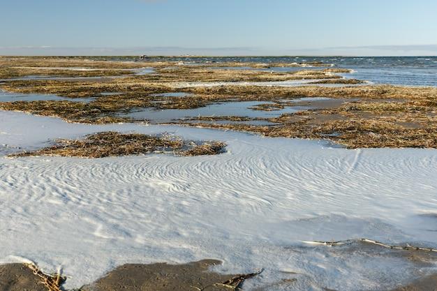 カザフスタンのkyzylorda地域にある大きな塩水湖であるkamyslybas湖の湖岸の海藻と泡