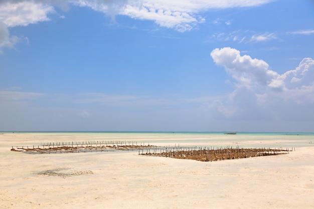 タンザニア、ザンジバルのビーチでの海藻栽培