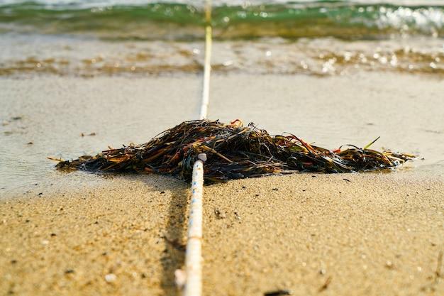Alghe su una corda