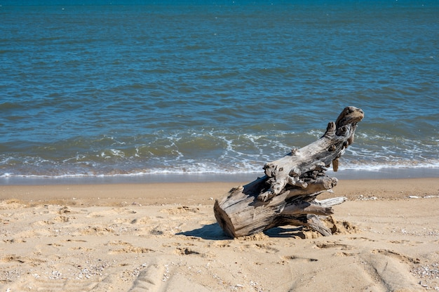A section of dead wood was on the beach