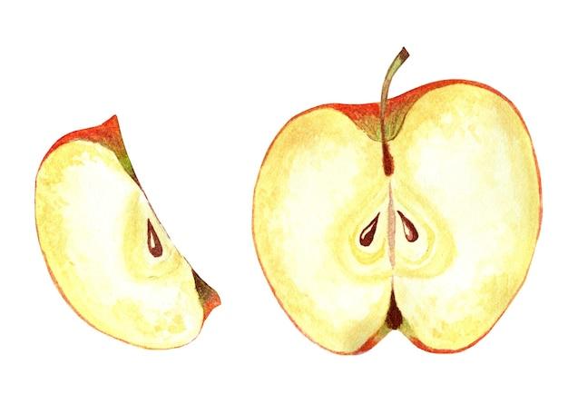 断面のリンゴ熟したジューシーなリンゴを細かく切った水彩イラスト白で隔離