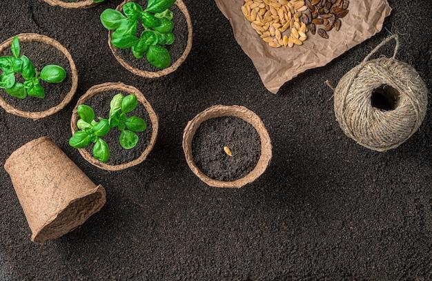 Семена в торфяной горшке и саженцы базилика на коричневой земле