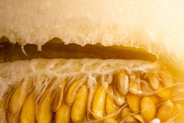 Семена внутри спелой дыни. разрезать дыню.