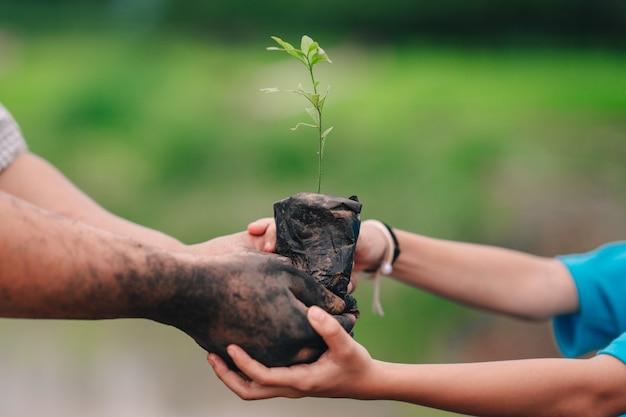 Посев дерева и руки взрослых и детей на посадку в грязи.