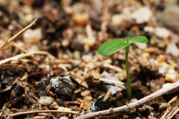 세계의 좋은 자연 토양과 물에 의해 나무에 성장하는 나무를 파종