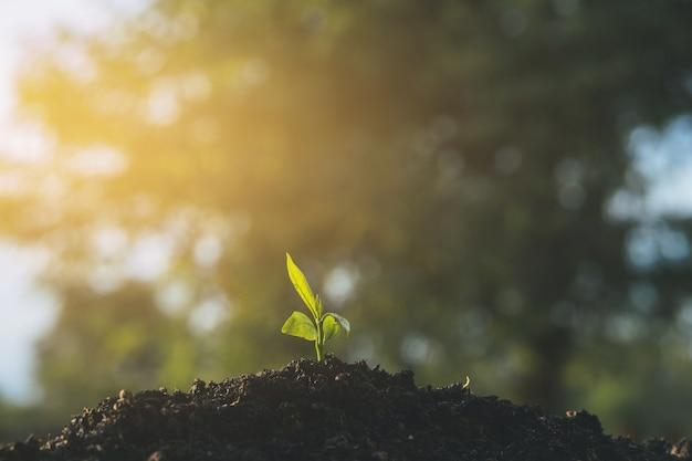 苗は土と太陽の光の中で育っています。地球温暖化を防ぐために植樹。