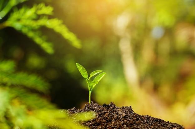 묘목은 태양의 토양과 빛에서 자라고 있습니다. 지구 온난화를 줄이기 위해 나무를 심습니다.
