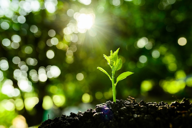Seedling are growing in the soil and light of the sun