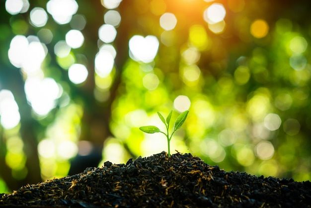 Seedling are growing in the soil with the backdrop of the sun