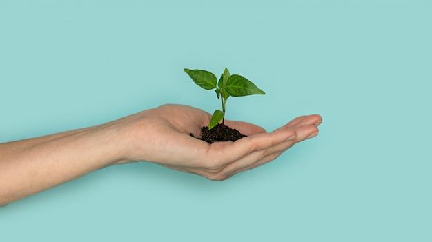 青色の背景に子供の手に葉と緑の芽を苗します。