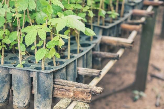 Seedling plant growing in nursery greenhouse