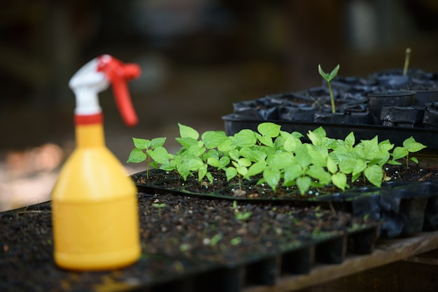 Seedling on planting tray near foggy bottle