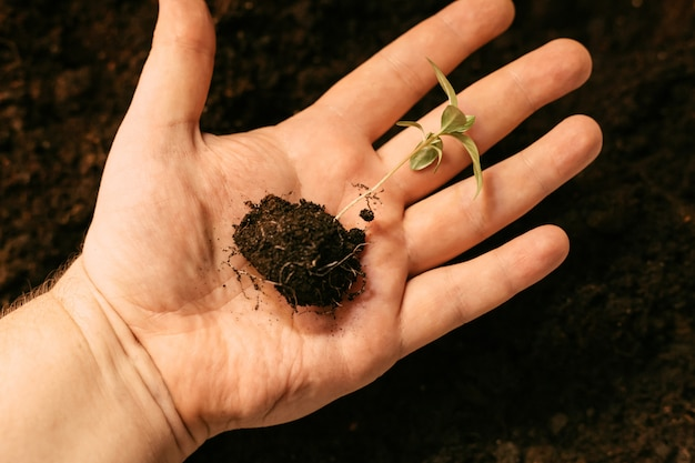 A seedling with a piece of earth lies on the palm
