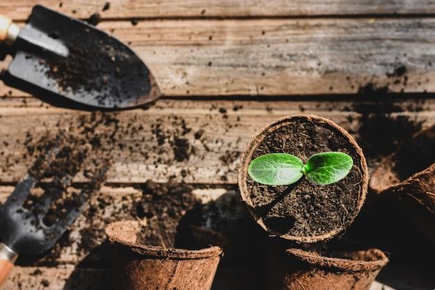Seedlings are growing in a coconut fiber pot.