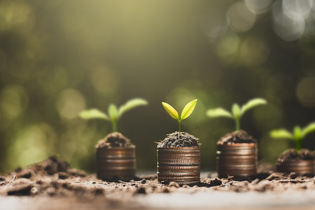 The seedlings are growing on the coins, thinking about financial growth.
