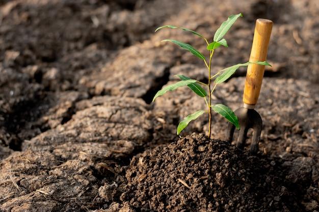 Seedlings are growing in dry soil.