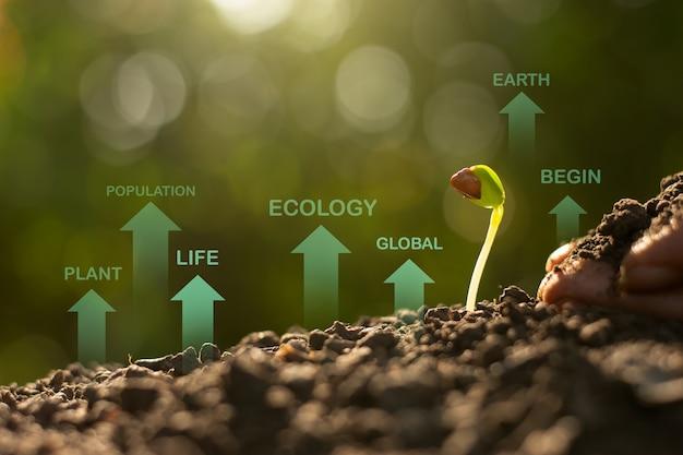 Саженцы растут из плодородной почвы, экологические концепции.