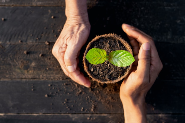 The seedlings are growing in a pot of coconut leaves and the hands of an old woman and a man's hand are surrounded by harmony, environmental concepts.