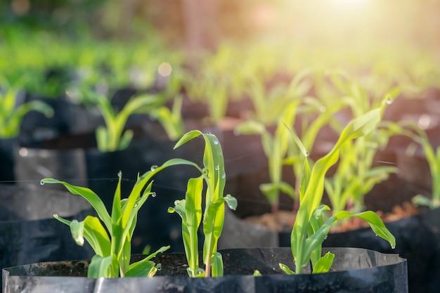 Seedlings are growing