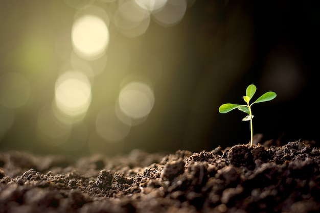 The seedlings are grown from the ground up with bokeh background