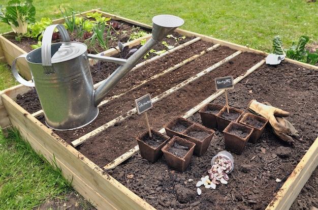 Seedlings in garden square