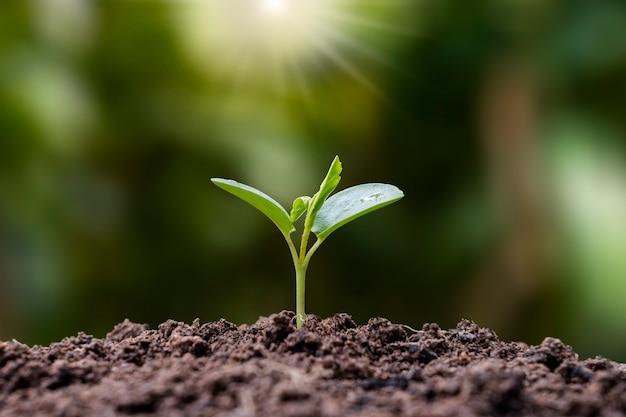 묘목은 비옥한 토양에서 자라며 아침 햇살이 빛나고 식물 성장과 생태 균형의 개념입니다.