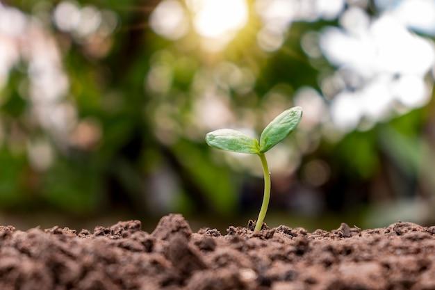 묘목은 비옥한 토양, 생태학적 개념 및 식물 성장에서 자랍니다.