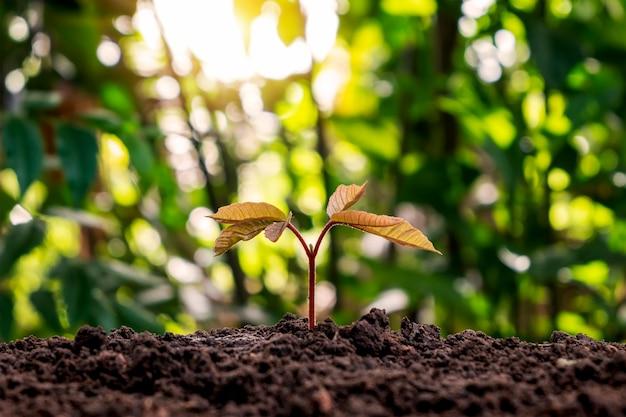 Саженцы растут из плодородной почвы, экологических концепций и роста растений.