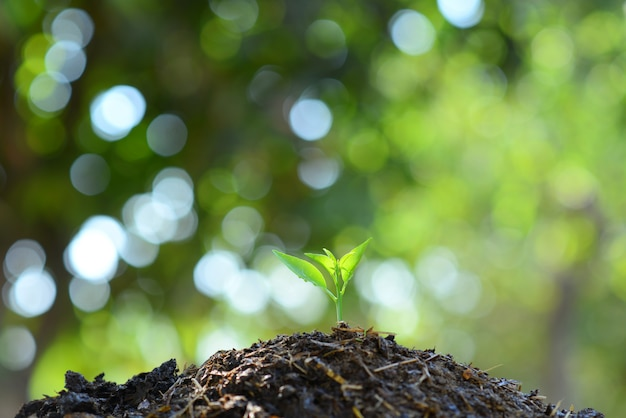 Seedlings grow in soil