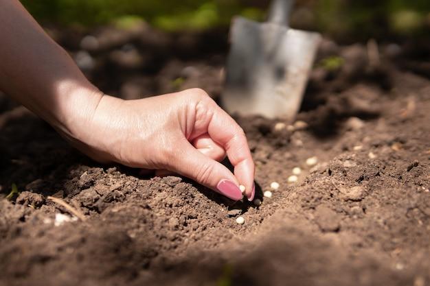 땅에서 식물을 키우는 여성 농부의 손에 있는 묘목