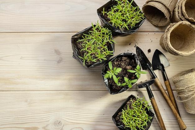 Саженцы цветов в черных пластиковых горшках