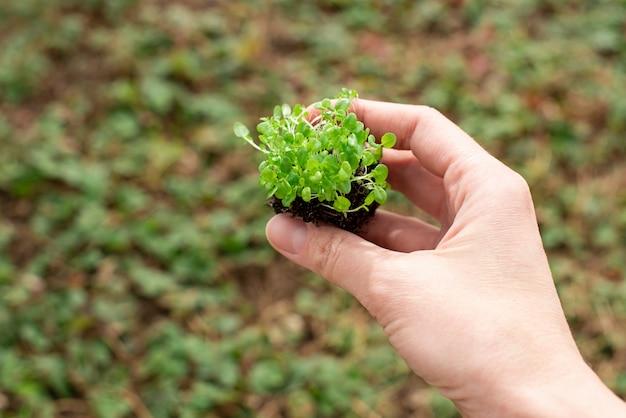 路上で手に葉を持つ緑の小さな芽の苗。