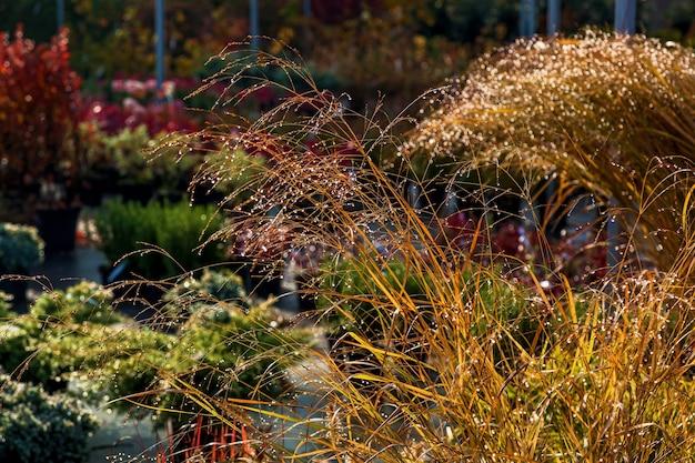 ガーデンショップの鉢植えの様々な木の苗。あなたの庭を飾るために、針葉樹や落葉樹の多くの種類、さまざまな花の販売。ガーデニングの植物と木の苗床の概念