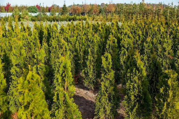 정원 상점에서 냄비에 다양한 나무의 묘목