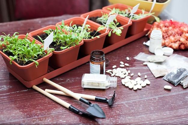 家の台所で野菜やハーブの苗