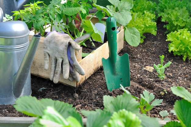Seedlings for plantation with watering can and shovel