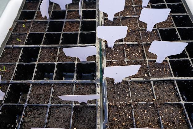 Саженцы растения в саду