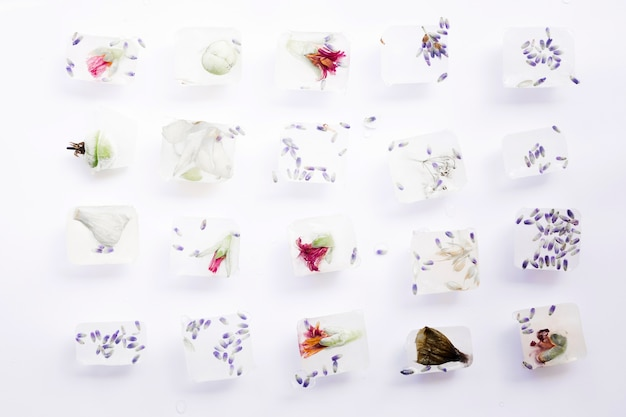 Seeds and flowers in cubes of ice