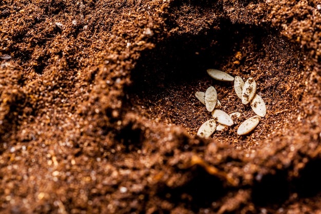 Seeds in the ground