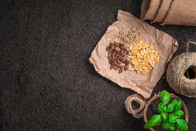 Семена на торфяных горшочках из крафт-бумаги и росток базилика на земле