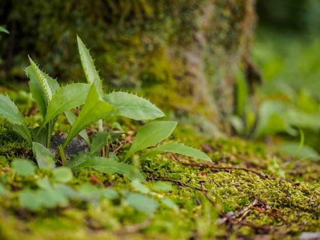 Фокус выбора - маленькие растения на фоне мха под деревом