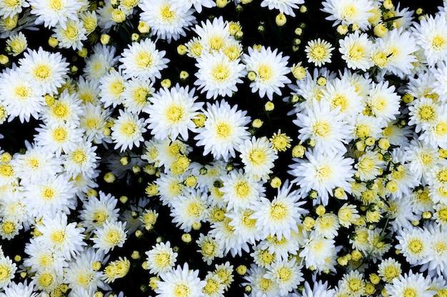 背景として多くのカラフルな花の選択